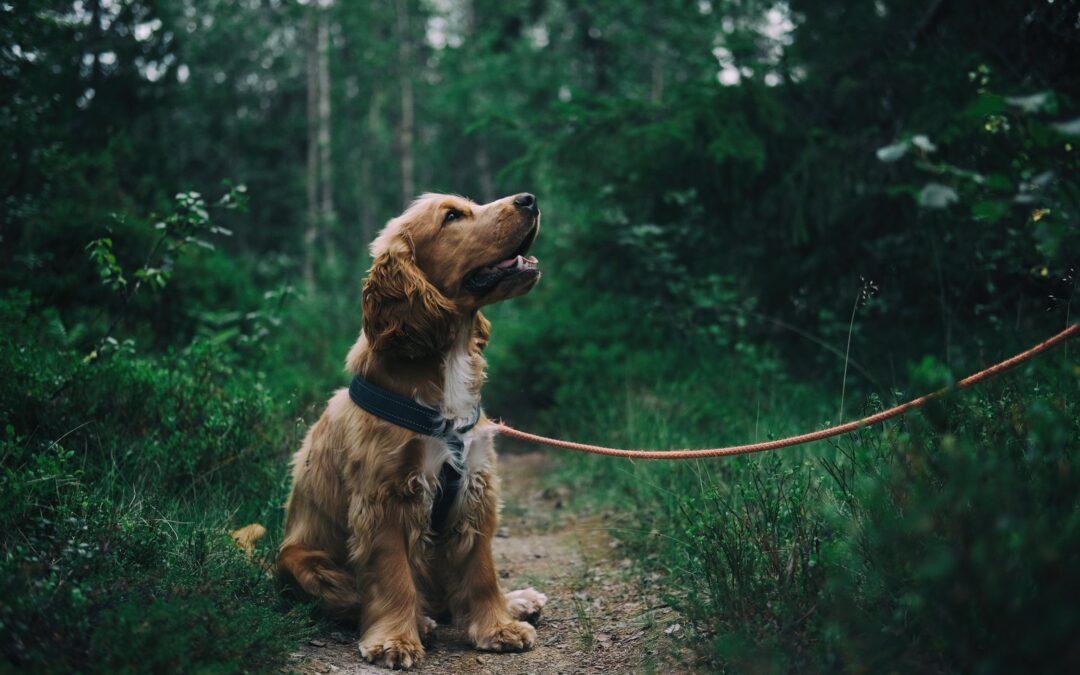 Vil du gerne have en hund? Sådan får du råd som ung