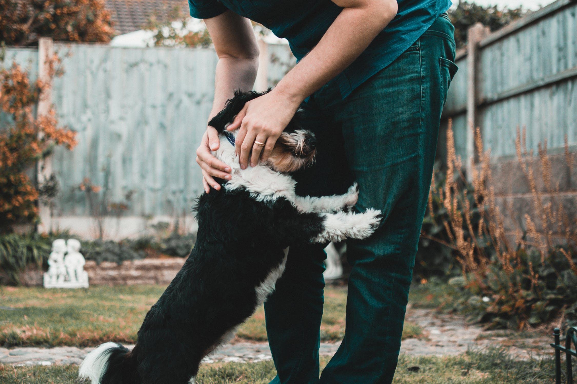 Hund og ejer
