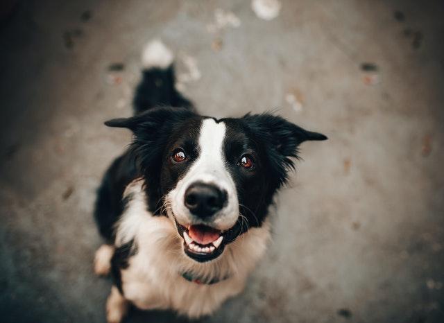 Fodrer du din hund rigtigt?