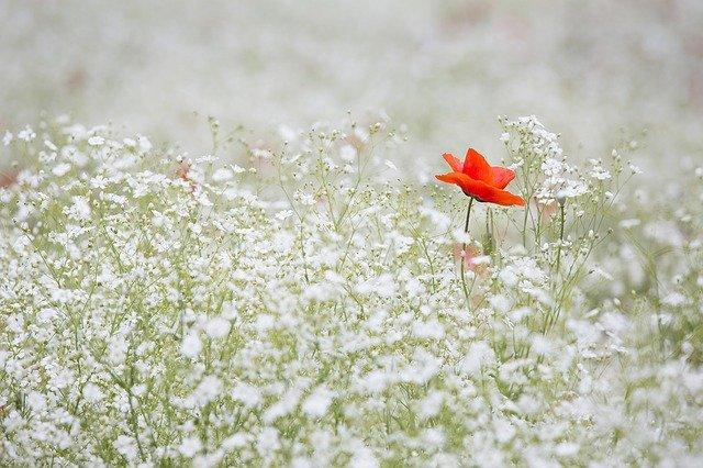 Haven kan være et pusterum hvis du er stresset